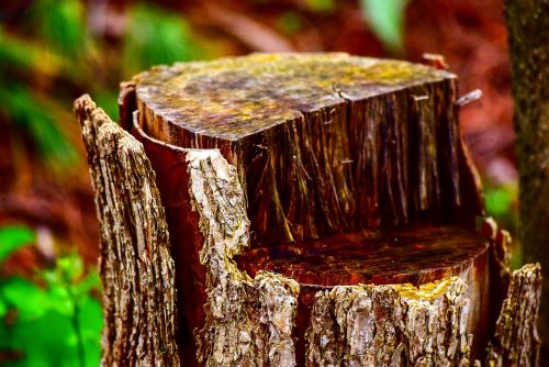 stump-removal-east-albury-smallservice