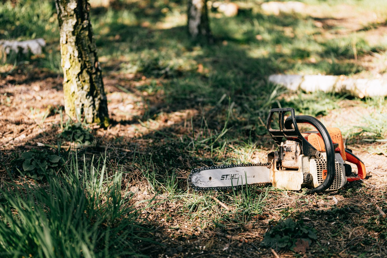 tree cut Lavington main